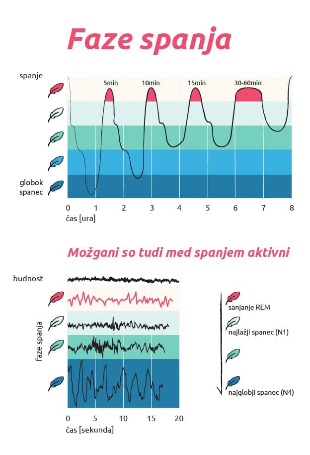 Infografika o fazah spanja
